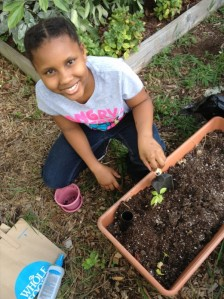 This Prodigal Kid just transplanted her sprout from its starter container to an Earthbox in the garden.