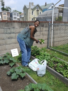 Resident from housing harvest spinach