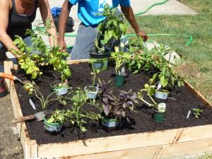 Edible Garden at Bloomfield Public Library