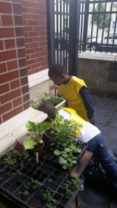 Thurgood Container planting