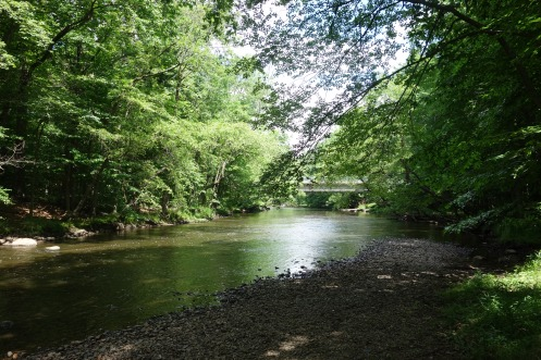 View of the Passaic River from the trail, June 2015